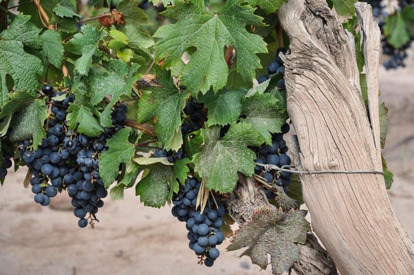 Phong cách Bordeaux - 1
