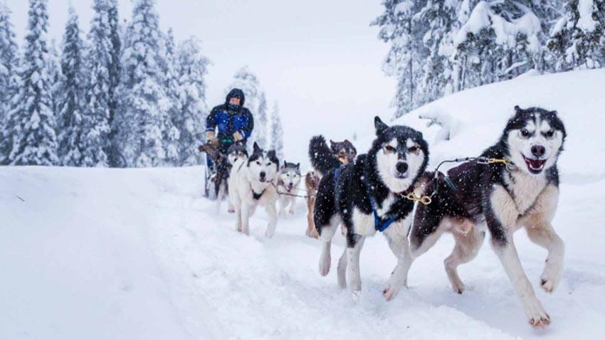"""Sống trong vùng """"mặt trời nửa đêm"""" Lapland-2"""