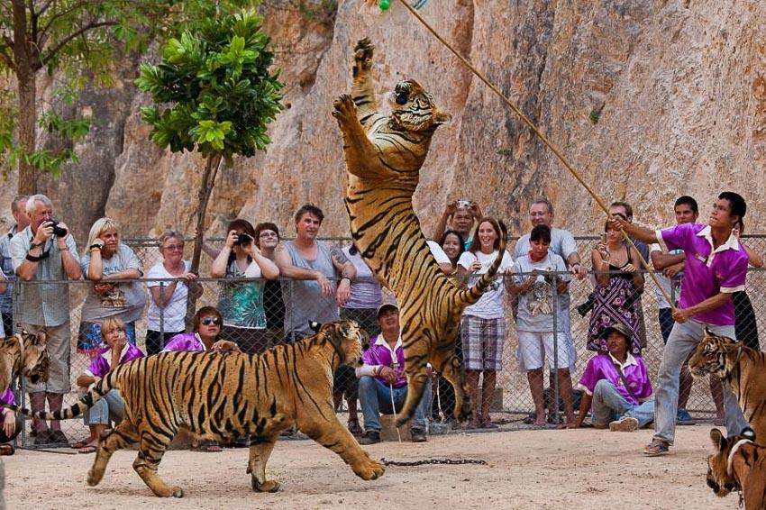 Thực trạng buôn bán hổ bất hợp pháp ở Đông Nam Á - 3