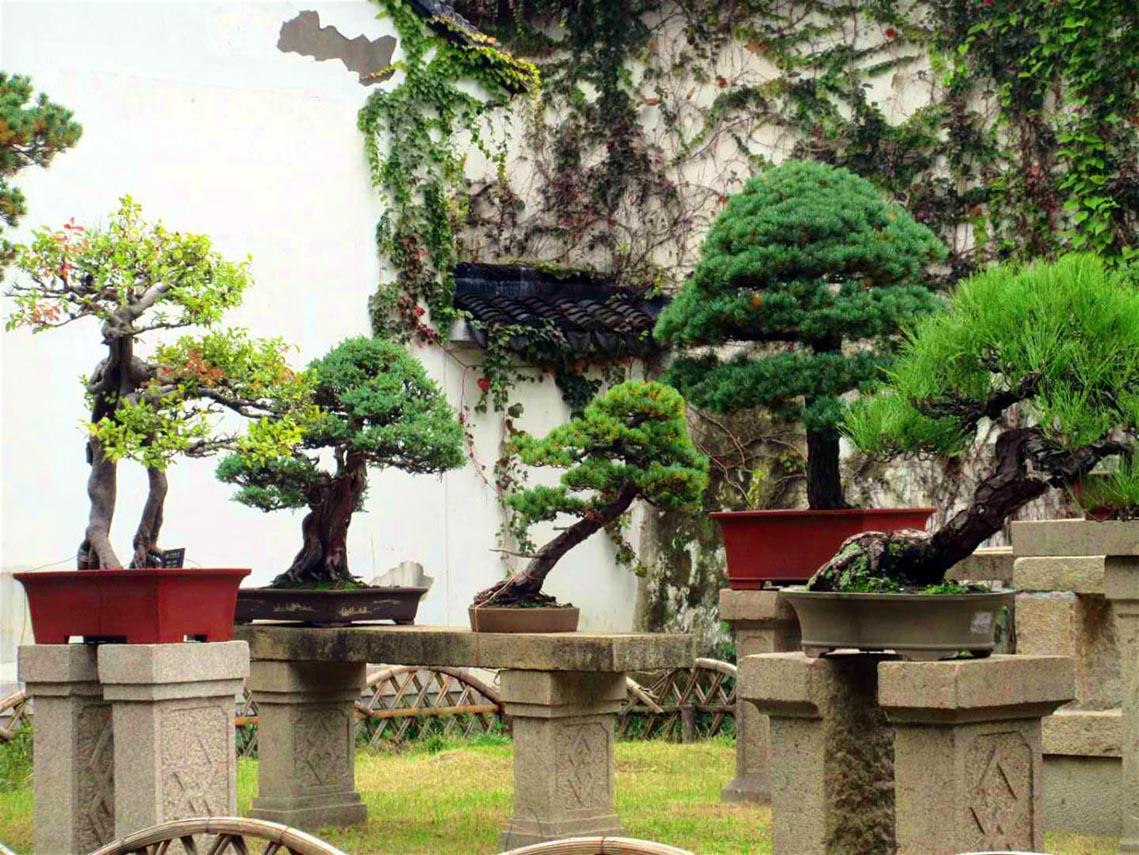Vườn cảnh Tô Châu, thiên đường nhân gian-17