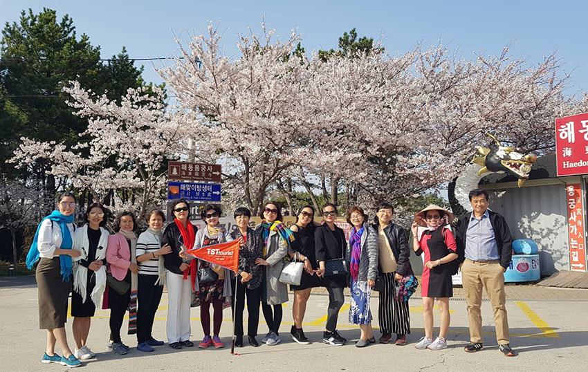 Đặc sắc những cung đường tour trải nghiệm mùa hoa anh đào - 3
