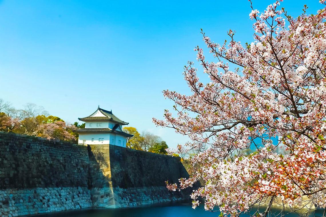 Đặc sắc những cung đường tour trải nghiệm mùa hoa anh đào - 2