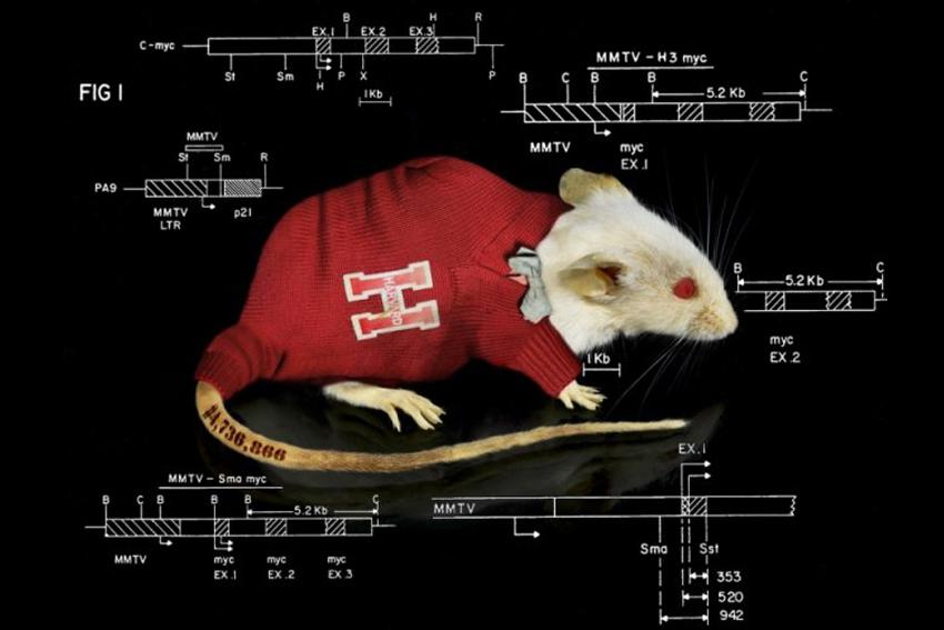 Chuột ơi, xin cảm ơn! - 1