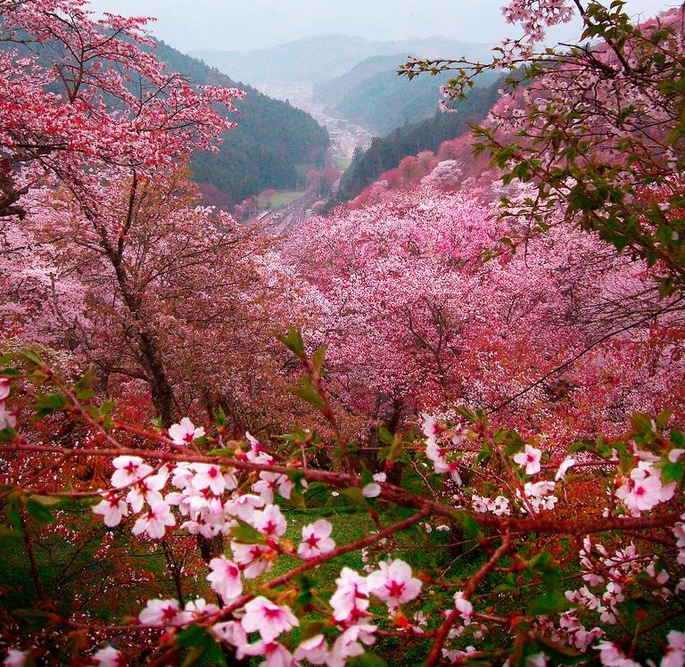 Những địa điểm ngắm hoa mùa Xuân lý tưởng nhất tại Việt Nam - 1