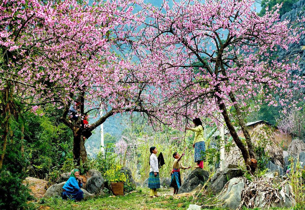 Những địa điểm ngắm hoa mùa Xuân lý tưởng nhất tại Việt Nam - 2