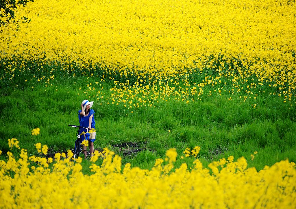 Những địa điểm ngắm hoa mùa Xuân lý tưởng nhất tại Việt Nam - 3