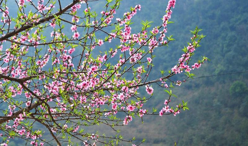 Những địa điểm ngắm hoa mùa Xuân lý tưởng nhất tại Việt Nam - 4