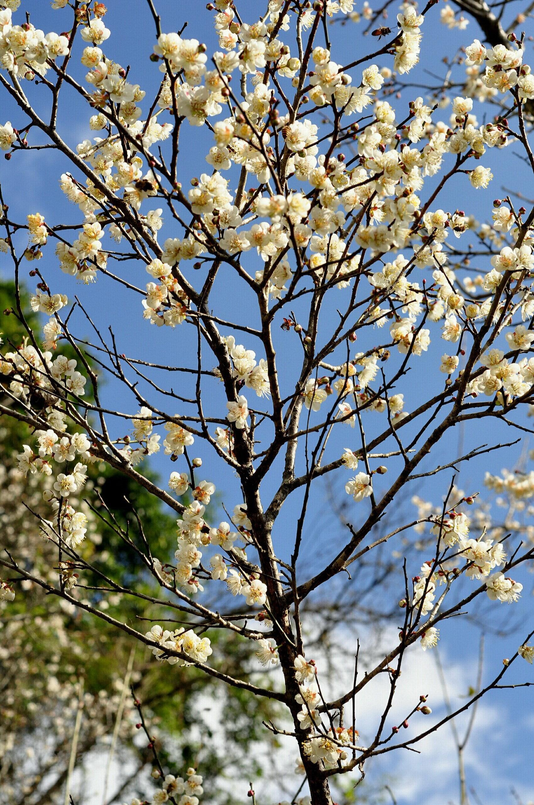 Những địa điểm ngắm hoa mùa Xuân lý tưởng nhất tại Việt Nam - 5