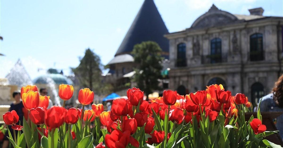 Những địa điểm ngắm hoa mùa Xuân lý tưởng nhất tại Việt Nam - 7