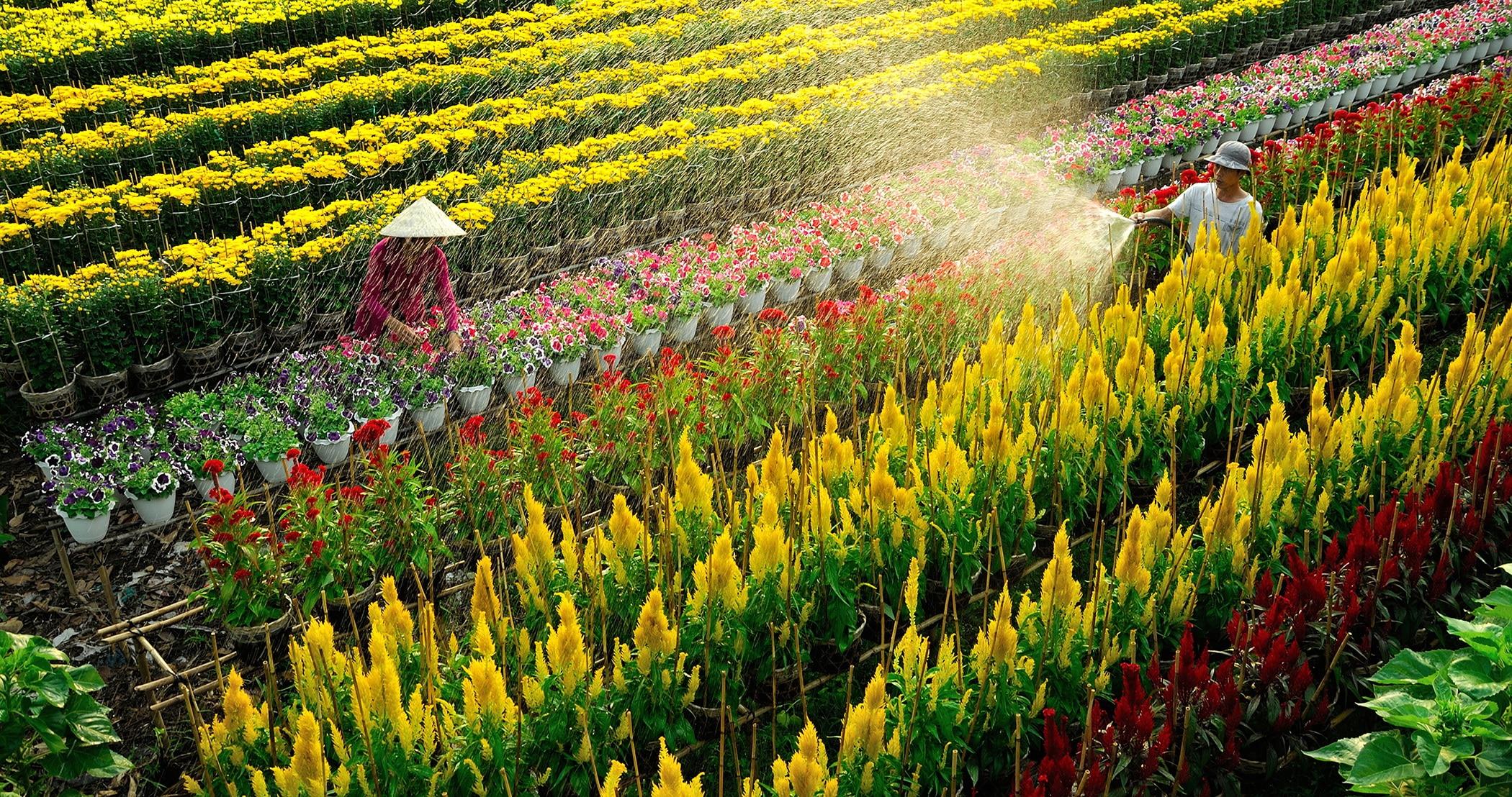 Những địa điểm ngắm hoa mùa Xuân lý tưởng nhất tại Việt Nam - 12