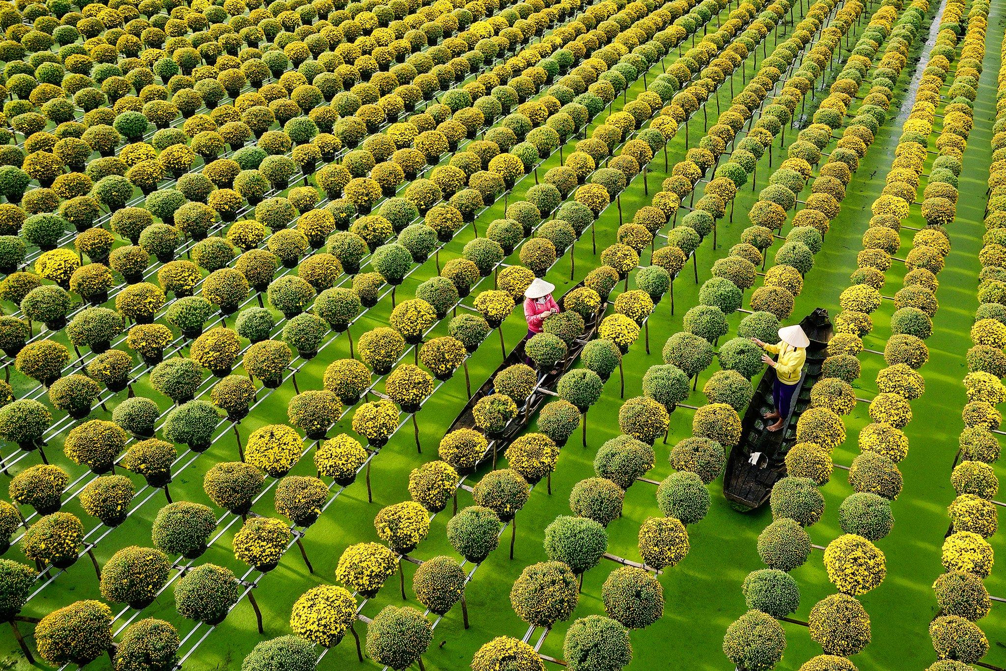 Những địa điểm ngắm hoa mùa Xuân lý tưởng nhất tại Việt Nam - 13