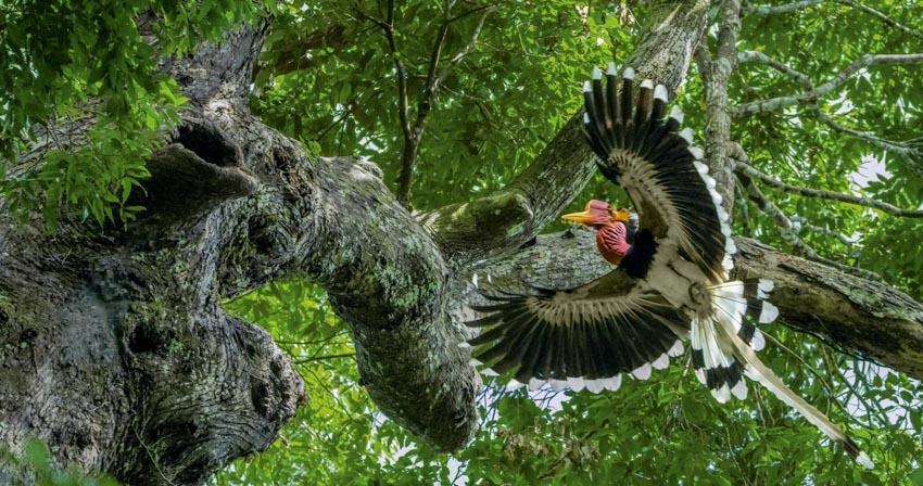 Nạn săn bắt trộm tại Đông Nam Á - 3