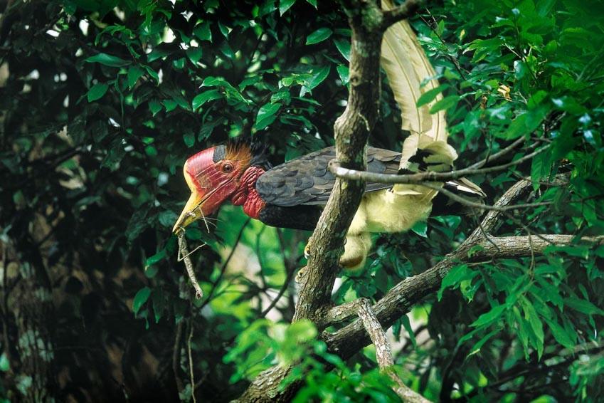 Nạn săn bắt trộm tại Đông Nam Á - 5