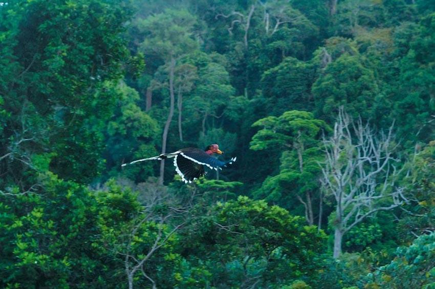 Nạn săn bắt trộm tại Đông Nam Á - 6