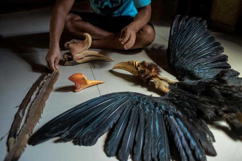 Nạn săn bắt trộm tại Đông Nam Á - 7
