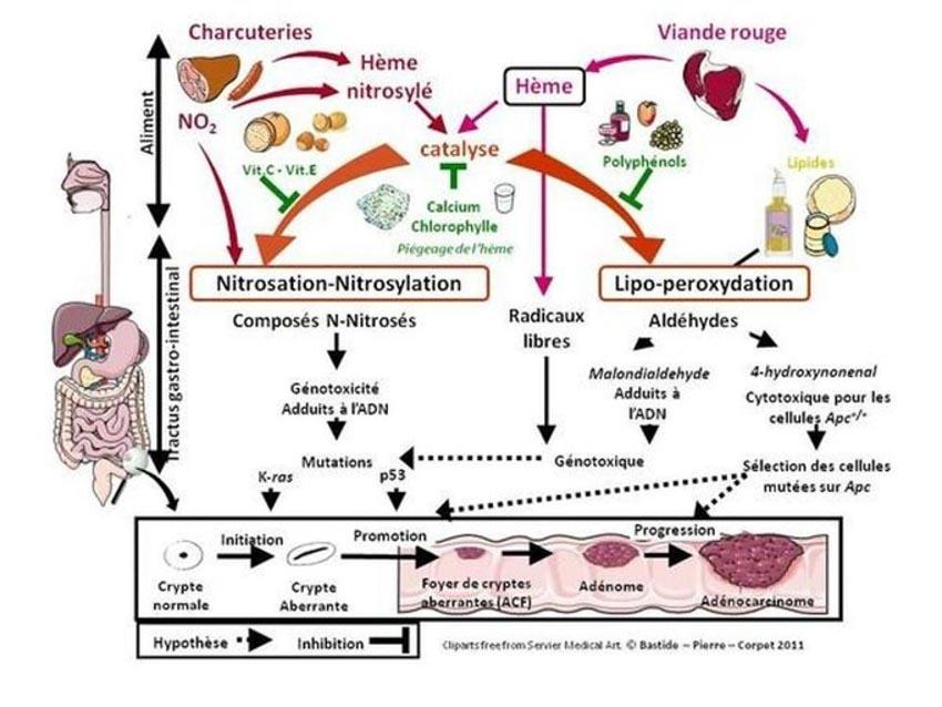 Ăn ít thịt đỏ và thịt lợn chế biến để giảm nguy cơ ung thư? -4