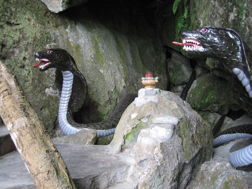Chuyện rắn ở Nam bộ xưa và nay -3