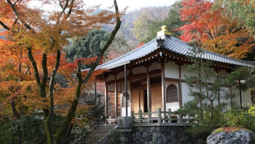 Nhật Bản quảng cáo 'du lịch không người' mùa dịch COVID-19 - 5