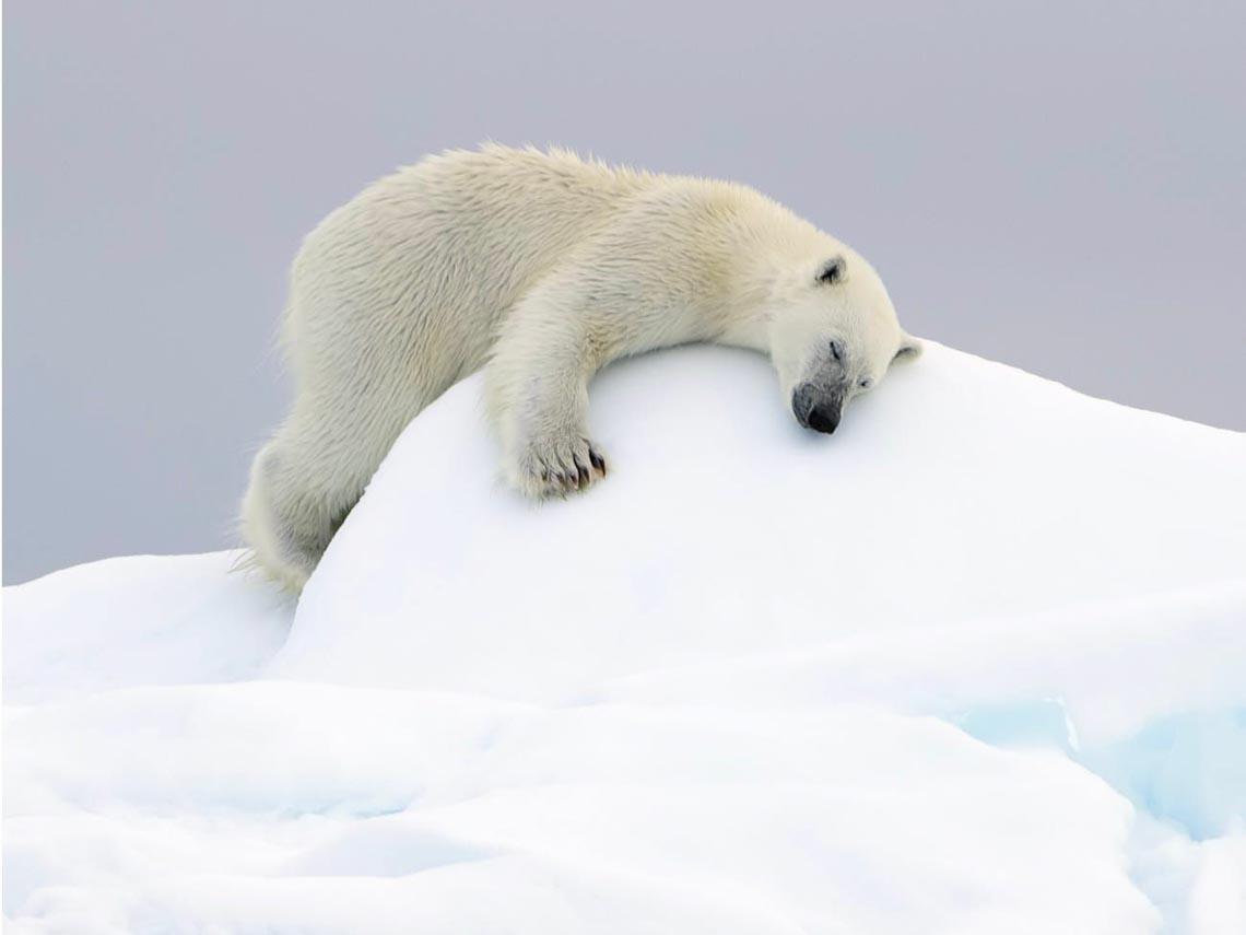 Những tác phẩm nhiếp ảnh xuất sắc về gấu Bắc cực -16