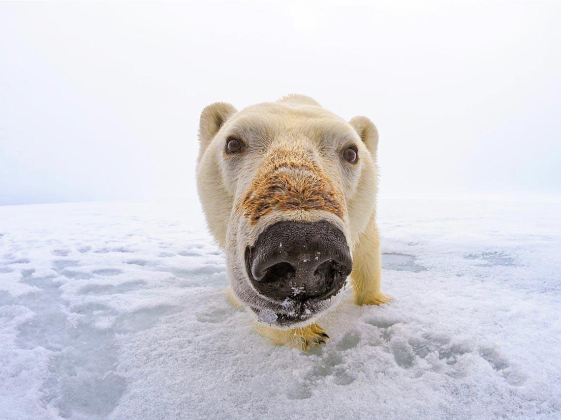 Những tác phẩm nhiếp ảnh xuất sắc về gấu Bắc cực -17