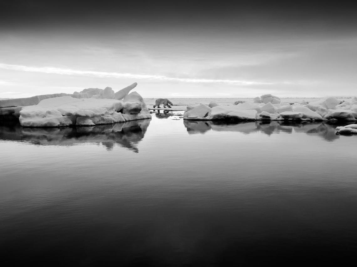Những tác phẩm nhiếp ảnh xuất sắc về gấu Bắc cực -2