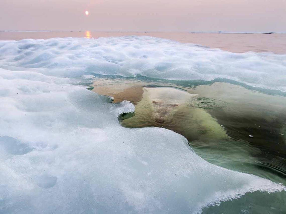 Những tác phẩm nhiếp ảnh xuất sắc về gấu Bắc cực -20