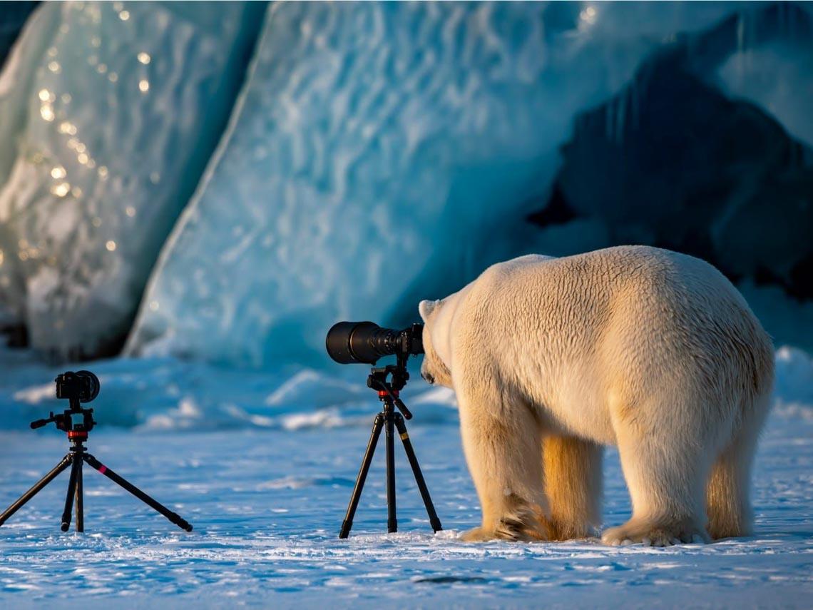 Những tác phẩm nhiếp ảnh xuất sắc về gấu Bắc cực -21