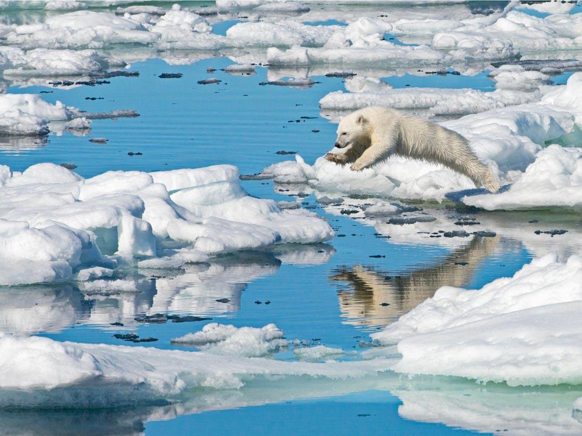 Những tác phẩm nhiếp ảnh xuất sắc về gấu Bắc cực -24