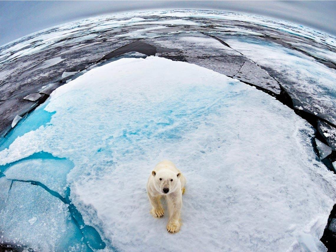 Những tác phẩm nhiếp ảnh xuất sắc về gấu Bắc cực -5