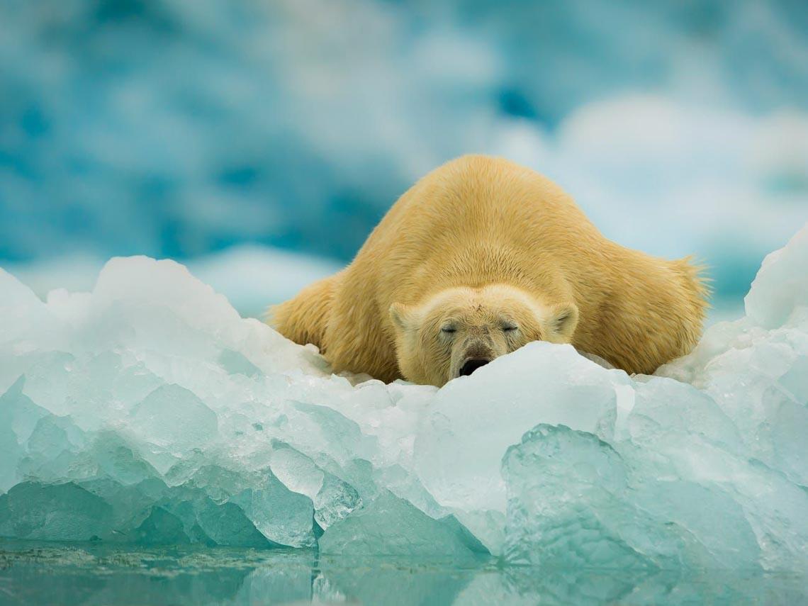 Những tác phẩm nhiếp ảnh xuất sắc về gấu Bắc cực -8