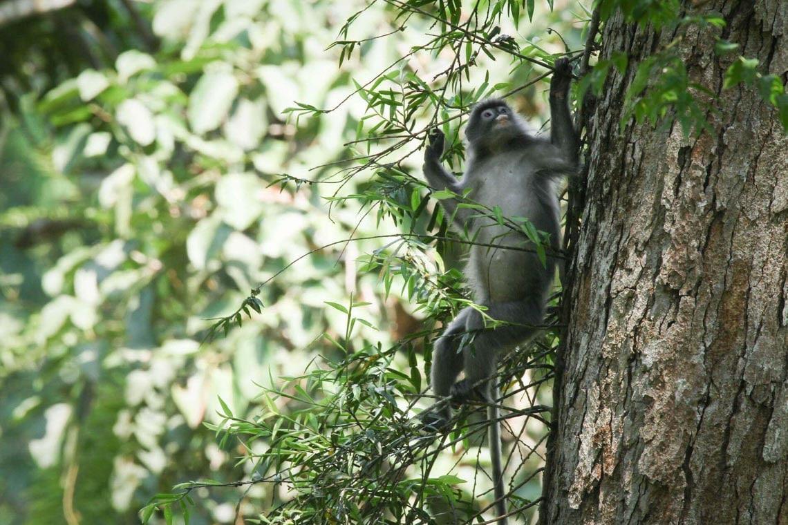 Thú vị với nhà trên cây ở Lào -3
