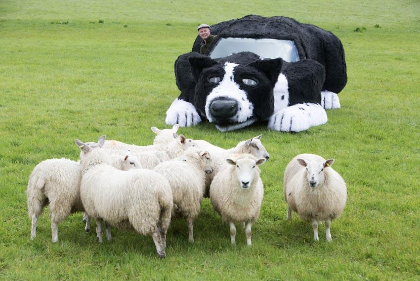 Ảnh vui: Xe hơi... chó chăn cừu! -4