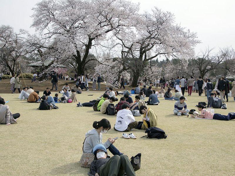 Nhật ra ngoài ngắm hoa anh đào bất chấp cảnh báo về coronavirus - 11