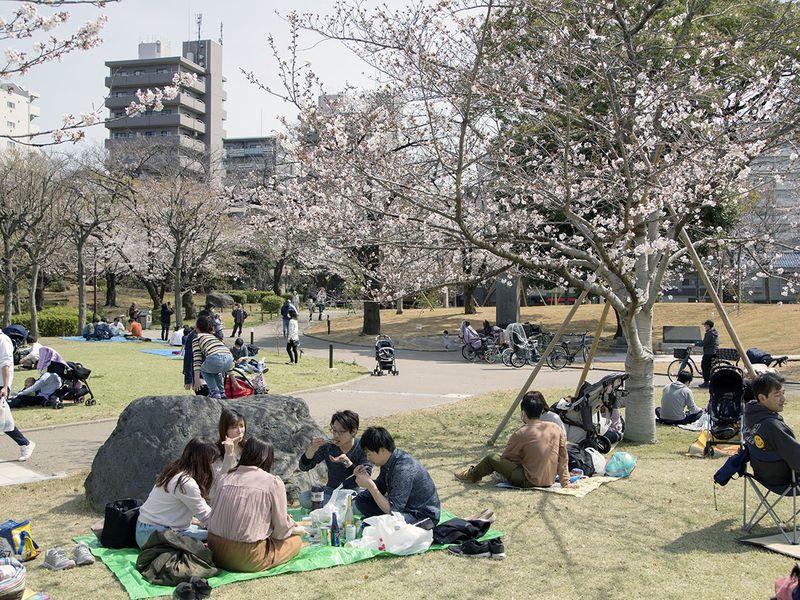 Nhật ra ngoài ngắm hoa anh đào bất chấp cảnh báo về coronavirus - 13