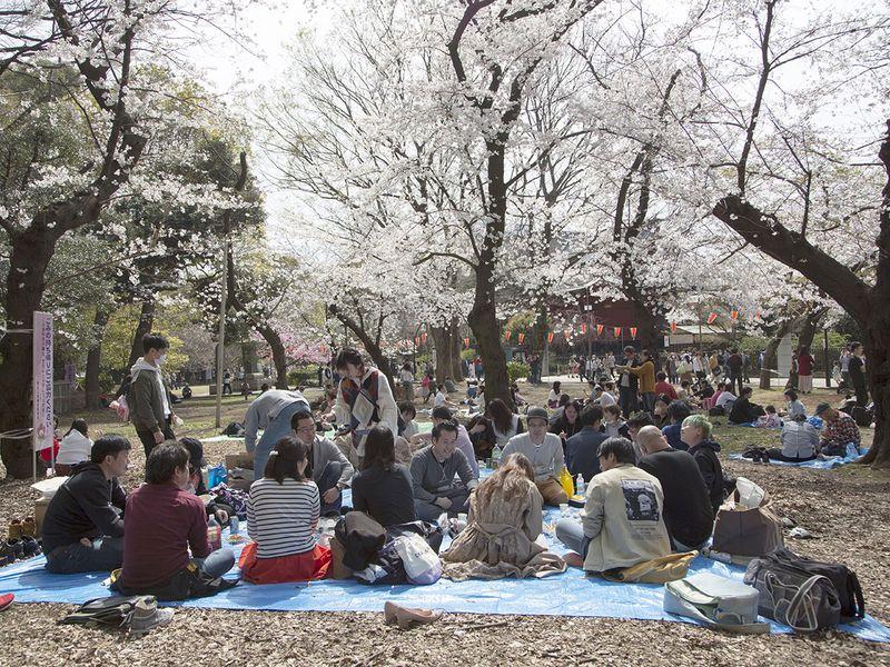 Nhật ra ngoài ngắm hoa anh đào bất chấp cảnh báo về coronavirus - 114
