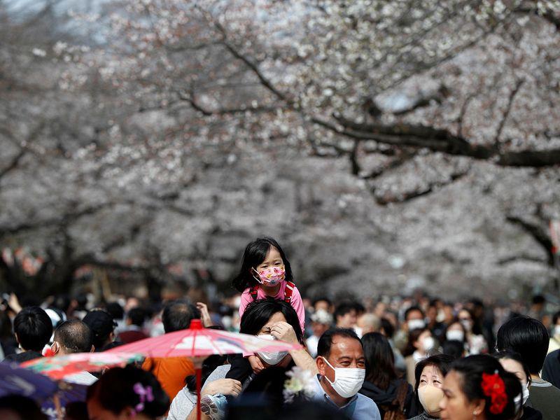 Nhật ra ngoài ngắm hoa anh đào bất chấp cảnh báo về coronavirus - 15