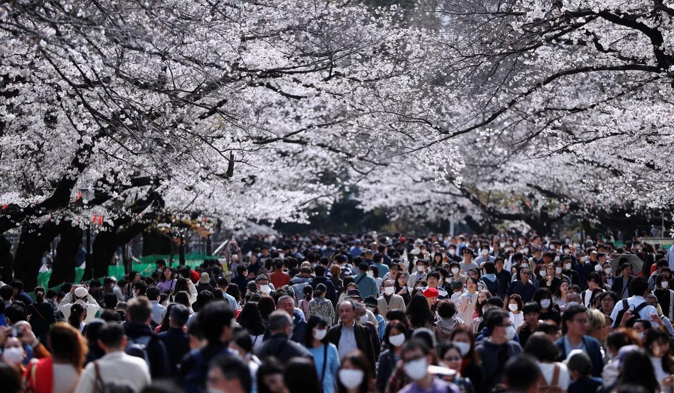 Nhật ra ngoài ngắm hoa anh đào bất chấp cảnh báo về coronavirus - 02