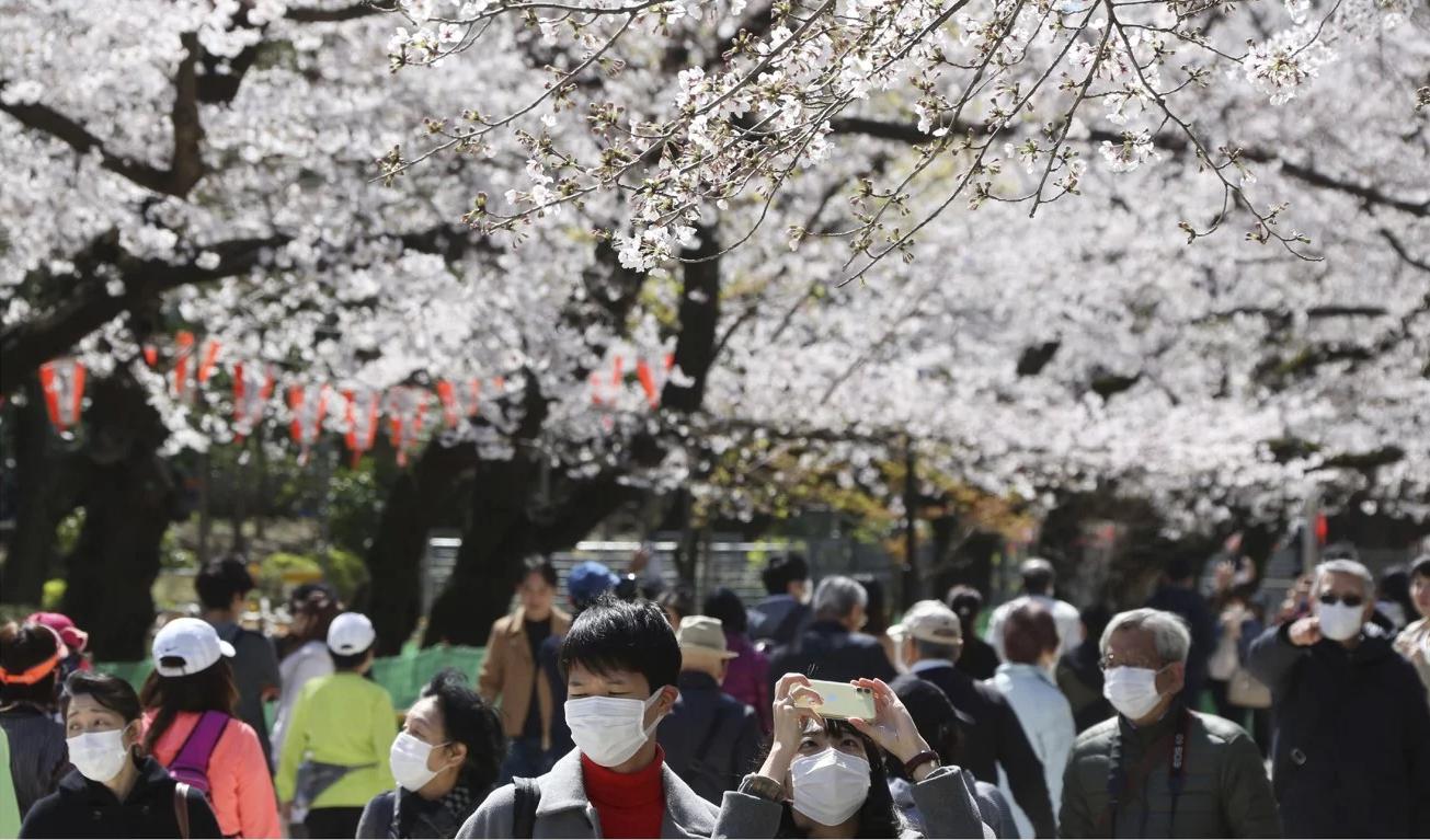 Nhật ra ngoài ngắm hoa anh đào bất chấp cảnh báo về coronavirus - 03