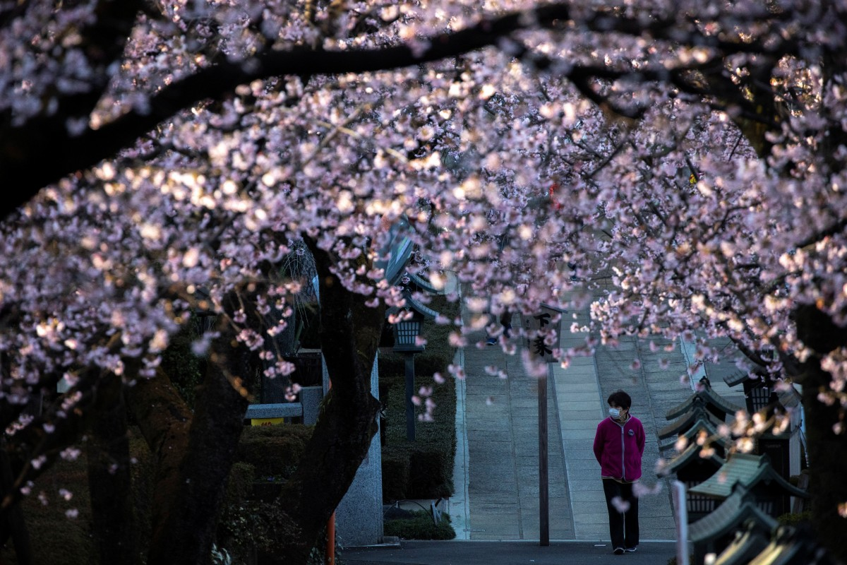Nhật ra ngoài ngắm hoa anh đào bất chấp cảnh báo về coronavirus - 05