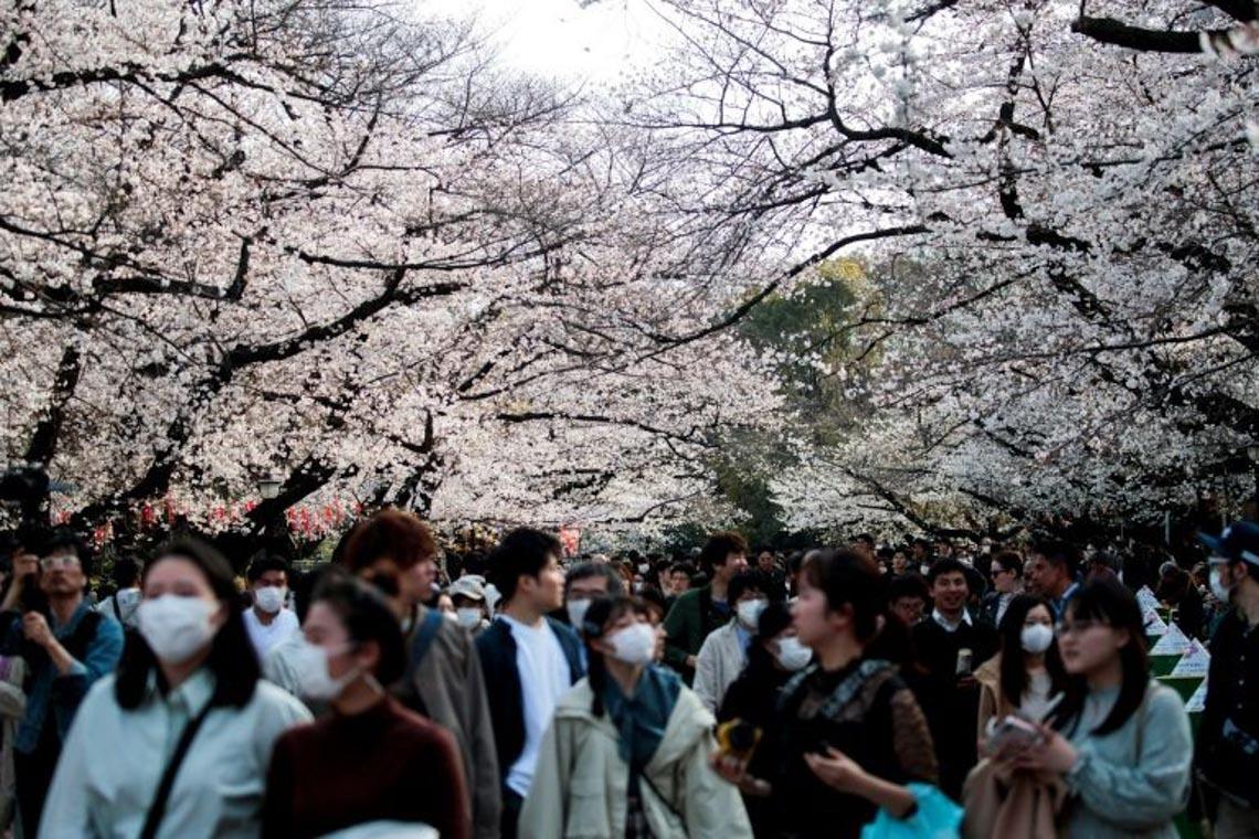 Bất chấp khuyến cáo, hàng ngàn người Nhật đổ xô đi ngắm hoa anh đào -1