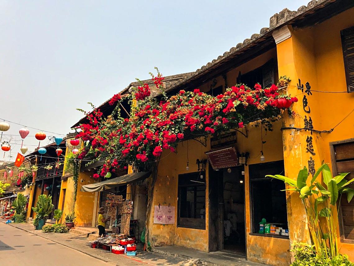Hoa giấy nở rực rỡ Hội An trong 'những ngày corona' -3