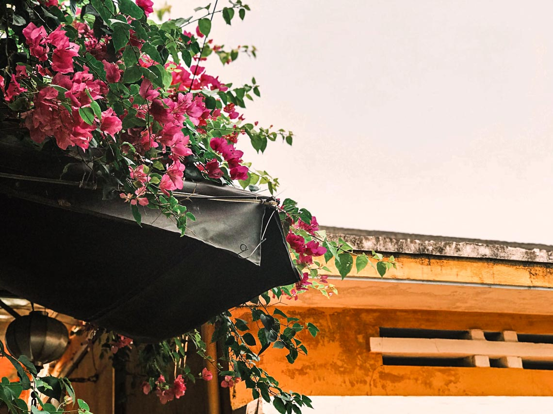 Hoa giấy nở rực rỡ Hội An trong 'những ngày corona' -8