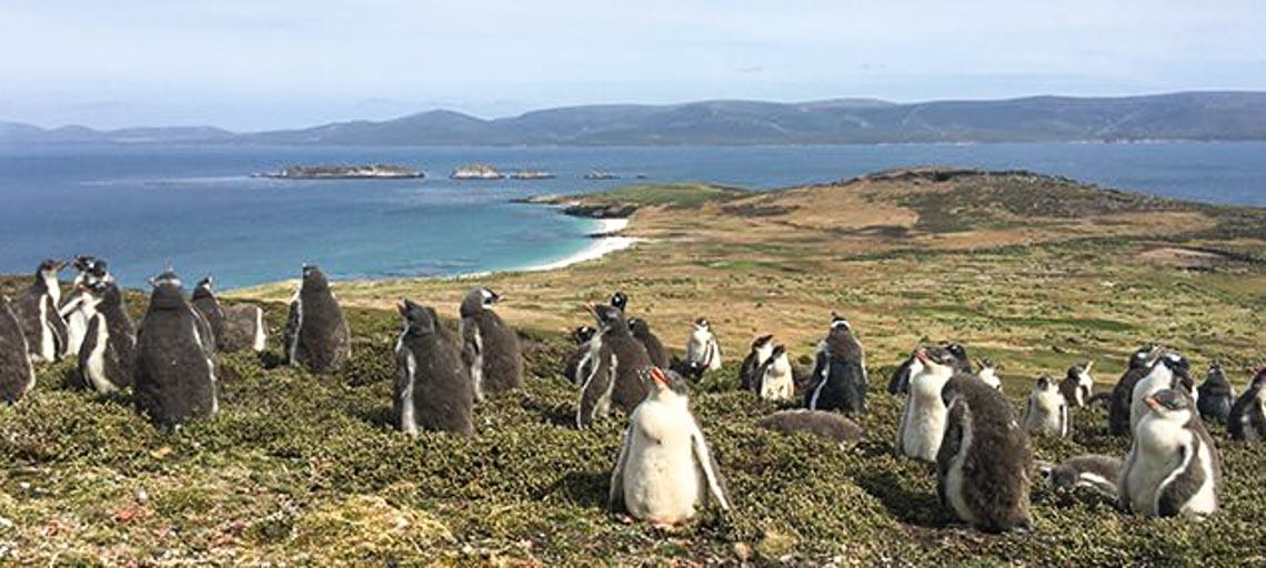 Khám phá quần đảo thiên đường chim cánh cụt Falkland -1