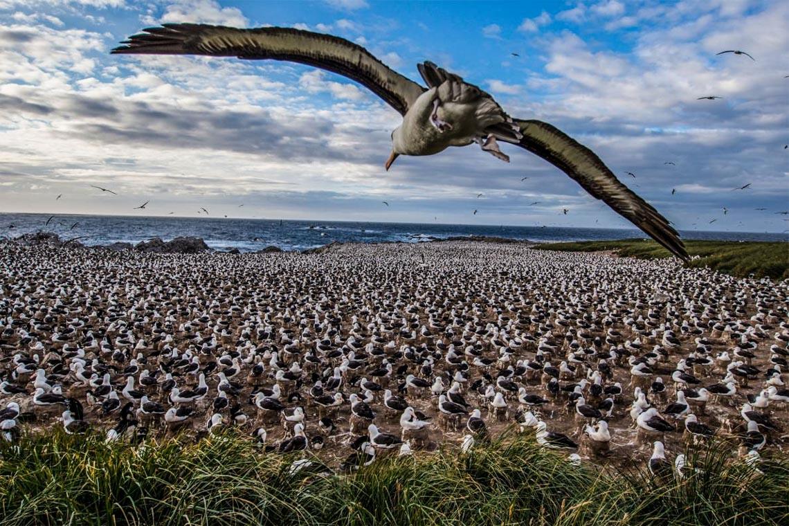 Khám phá quần đảo thiên đường chim cánh cụt Falkland -3