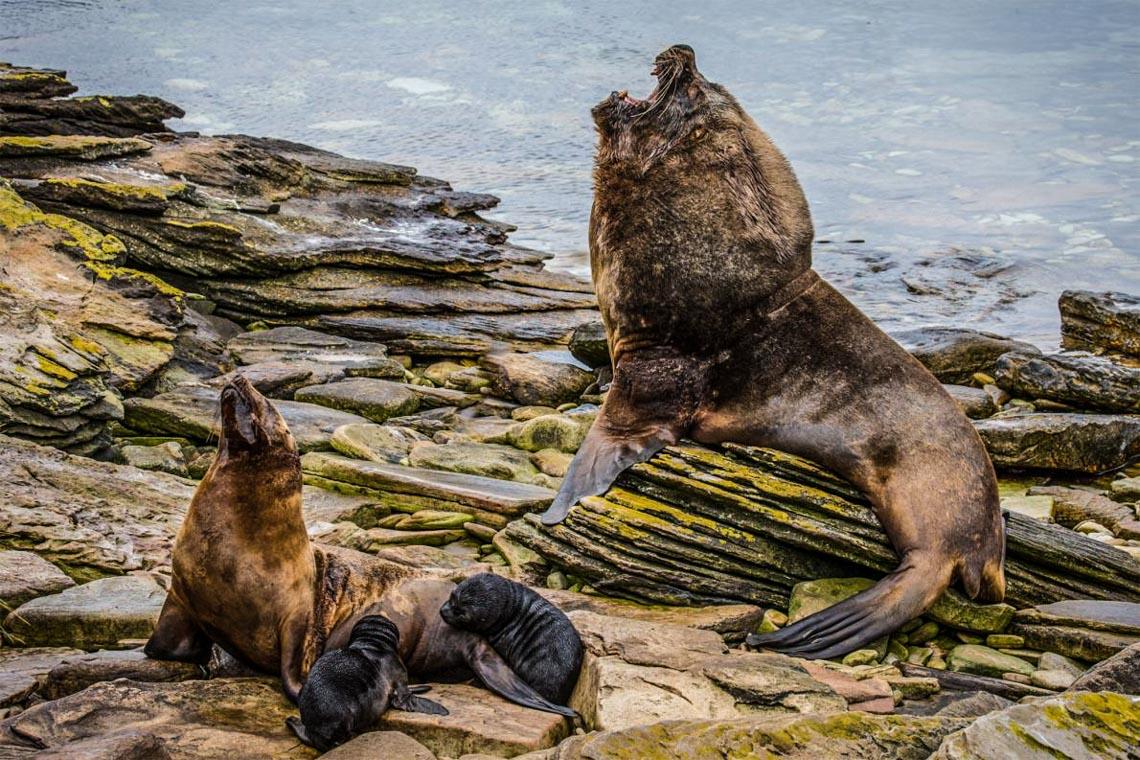 Khám phá quần đảo thiên đường chim cánh cụt Falkland -4