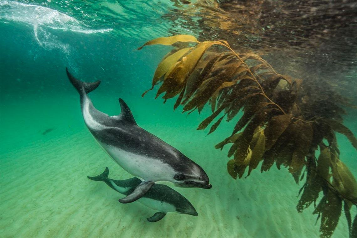 Khám phá quần đảo thiên đường chim cánh cụt Falkland -5