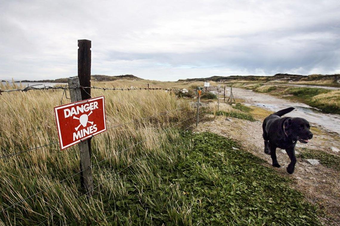 Khám phá quần đảo thiên đường chim cánh cụt Falkland -6