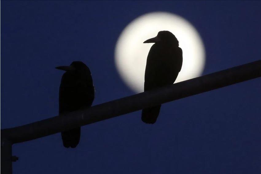 Ngắm Siêu Trăng Giun thắp sáng trời đêm -5