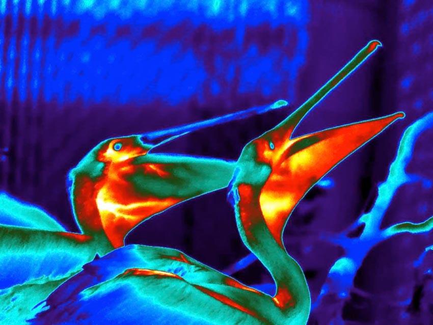Nghệ thuật của các nhà khoa học: Những bức ảnh giải phẫu rực rỡ -2