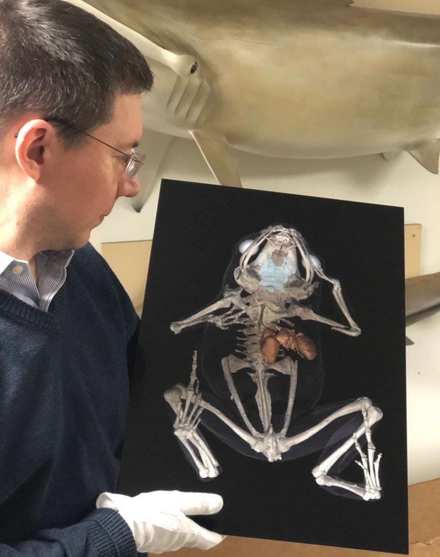 Nghệ thuật của các nhà khoa học: Những bức ảnh giải phẫu rực rỡ -4